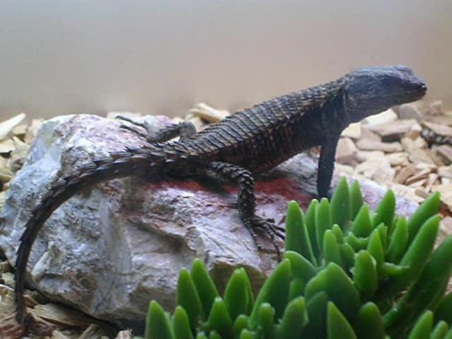 Leeds Reptile Shop