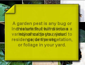 What Each Home Owner Must Recognize About Garden Pests
