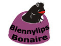 Blennylips Bonaire Video Dive Log