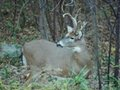 October Whitetails
