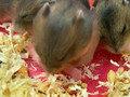 Hamster Babies Progress