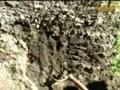 ザ!鉄腕!DASH!! 動画〜●「DASH村〜土壌改良〜」●「手作りカメラで動物と記念写真撮れるか?」〜091025