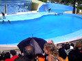 delfinario Avana