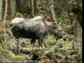 Wildlife Documentaries