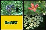 HerbTV