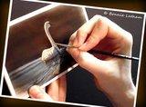 Wildlife Art & Nature Paintings - Artist Bonnie Latham