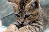STOP ANIMAL CRUELTY!!