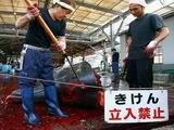 Japanese Whaling ICR Info