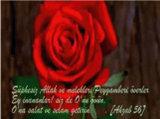 Peygamber Sevdalilari