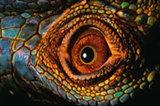 Reptiles Insight