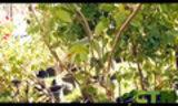CTN Green