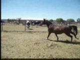 Circlel horses