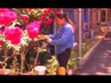 Garden Girl TV: Urban Sustainable Living