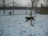 Filmpjes_hondenpension