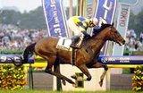 kinghorse2